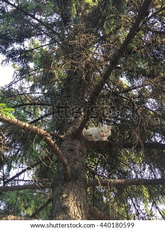 White, stray cat stuck in a tree. - stock photo