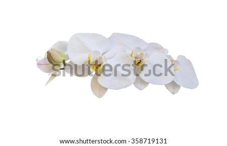 White streaked orchid flower, isolated