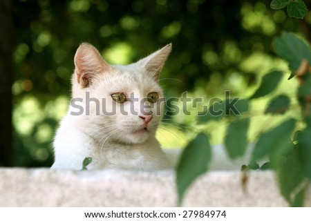 White street cat staring at something
