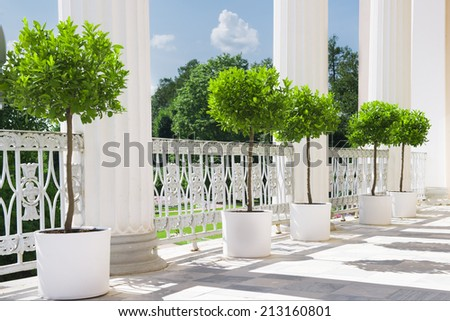 White summer terrace with potted plant near railing. Garden view on sunny day. - stock photo