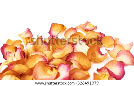 White surface covered with pink old dried rose petals as a romantic background composition - stock photo