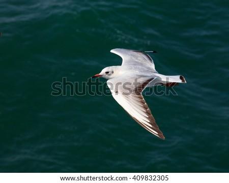 White swallows in the sea of kyuchu , japan - stock photo