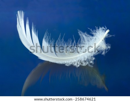 white swan feather isolated from background  - stock photo