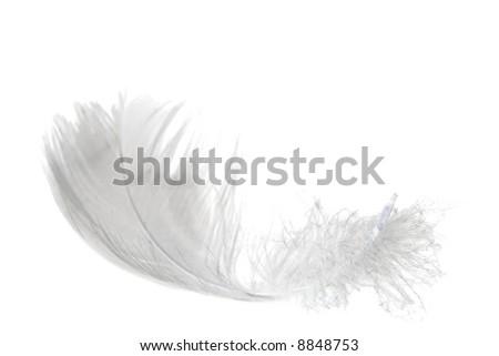 white swan feather isolated on white background - stock photo