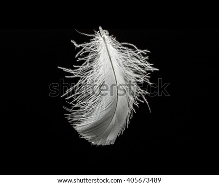white swan feather on black background isolated, flying feather - stock photo