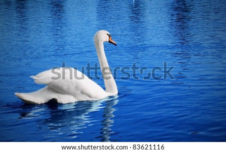 White swan floats in blue water of lake - stock photo