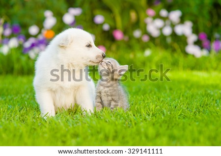 White Swiss Shepherd`s puppy kissing kitten on green grass - stock photo