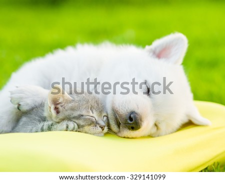White Swiss Shepherd`s puppy sleeping with kitten on pillow - stock photo