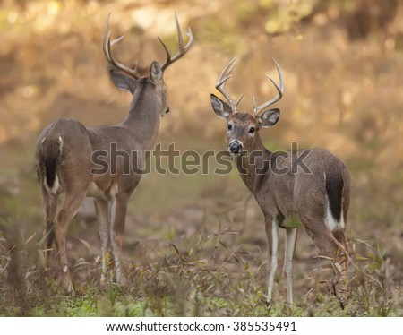 White tail in west park  - stock photo