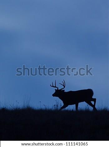 White-tailed Buck Deer silhouette, running on ridge top, Flathead Indian Reservation, Montana; whitetail / white tail / white-tail / white tailed / whitetailed - stock photo