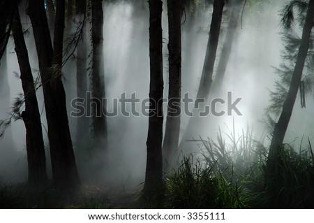 white thick mist in dark forest, photo taken in canberra, australia - stock photo