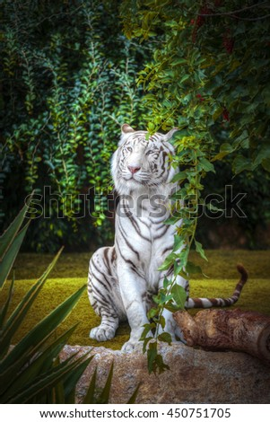 white tiger rests among trees and rocks - stock photo