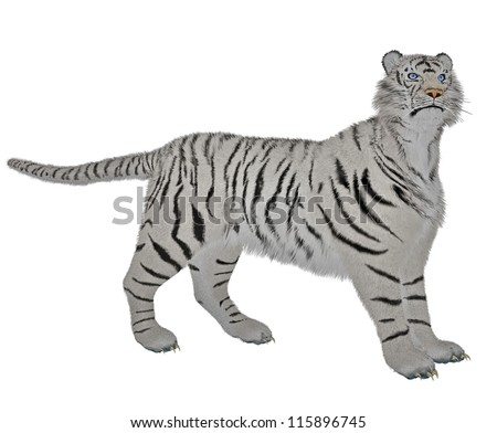 White tiger standing in alert pose in white background