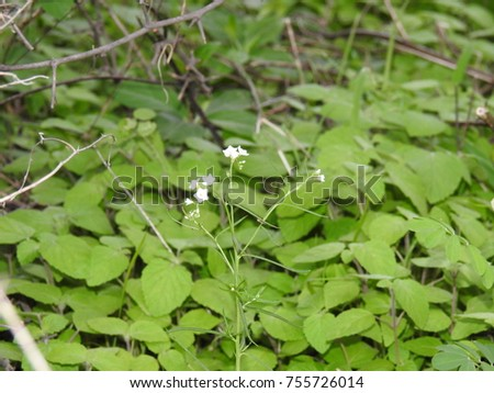 White tiny flowers bunch green leafs stock photo royalty free white tiny flowers and bunch of green leafs leaves mightylinksfo