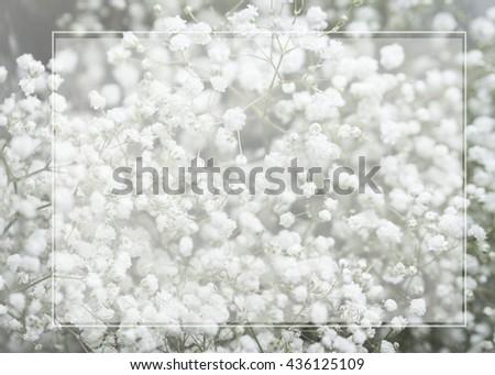 White tiny flowers (Gypsophila) and soft text box , wedding invitation concept - stock photo