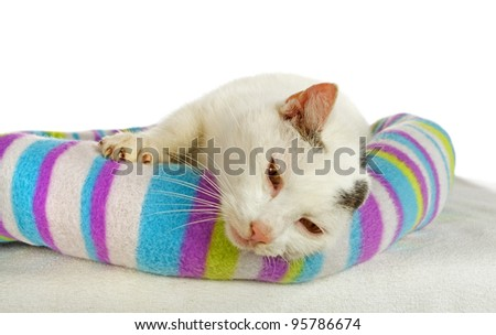 White tomcat in his cat bed - stock photo
