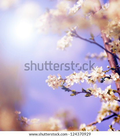 White tree flowers in spring - stock photo