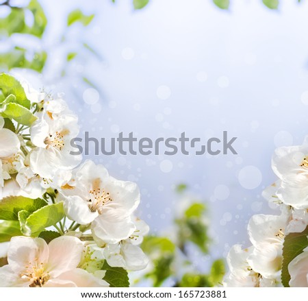 White tree flowers in spring/Apple tree branches on blue sky