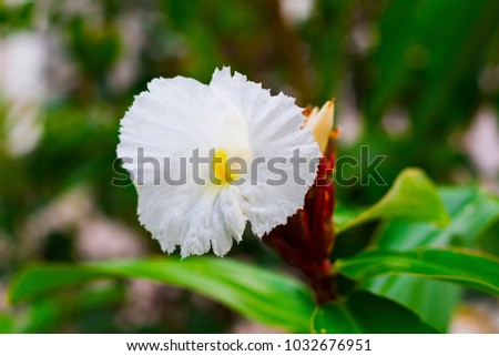 White tropical flower on green branch stock photo 1032676951 white tropical flower on green branch with buds white flower on green branch white mightylinksfo