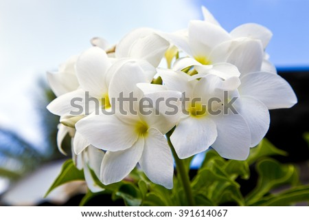 White tropical flowers bora bora island stock photo royalty free white tropical flowers in bora bora island amazing nature french polynesia mightylinksfo