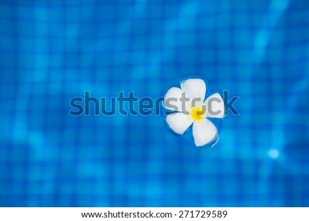 White tropical frangipani flower floating on the water in infinity pool - stock photo