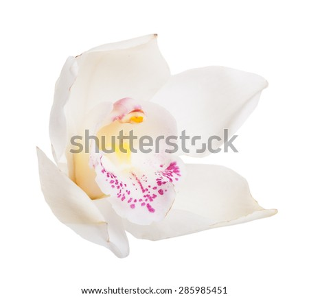 White tropical orchid flower isolated on white background - stock photo