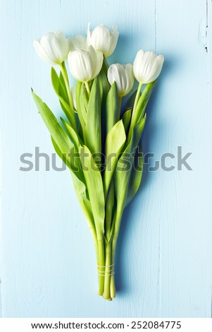 white tulip on blue wooden table - stock photo