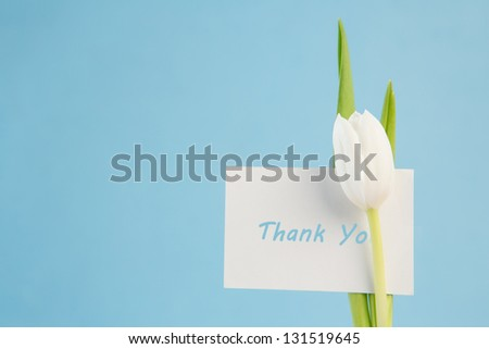 White tulip with a thank you card on a blue background close up - stock photo
