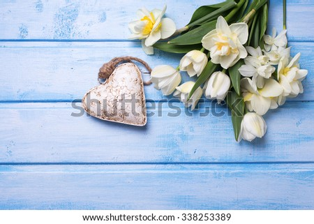 White tulips and narcissus flowers  and decorative heart on blue  wooden background. Selective focus. Place for text. - stock photo