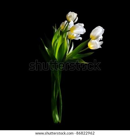 White tulips boquet on black background, still life. - stock photo