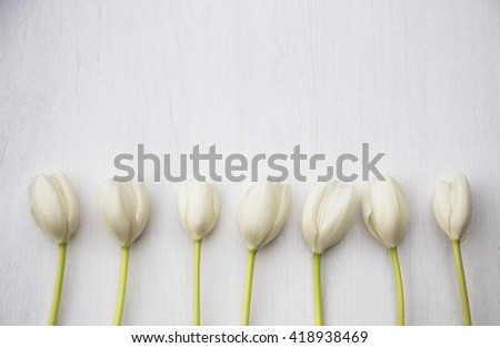 White tulips on white wood background - stock photo