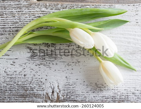 white tulips over wooden  background