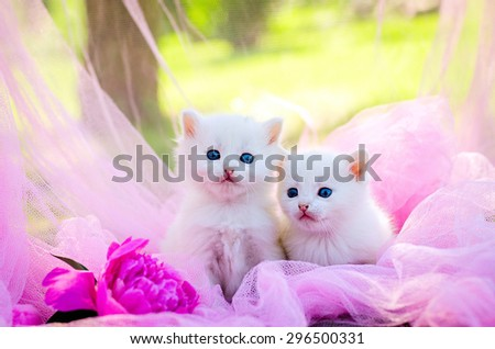 white two kitten on the pink background with flowers - stock photo