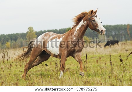 white two-tone brown horse running on a grass on a background of green forest