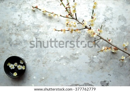 White ume (Japanese apricot) blossoms with black small bowl - stock photo
