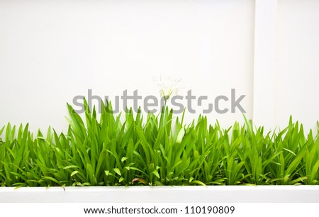 White wall and green grass - stock photo