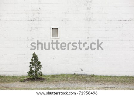 white wall with tree - stock photo