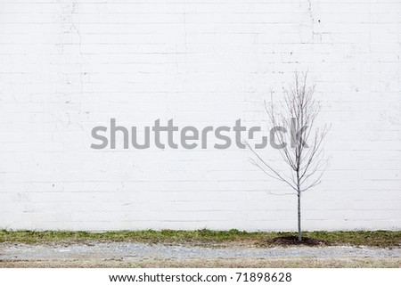 white wall & young tree - stock photo