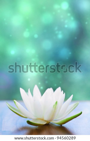 white water lilly flower - stock photo