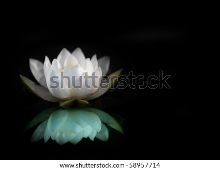 White water lily reflected in water, with black background - stock photo