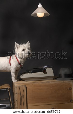 White West Highland Terrier sitting at a typewriter on a wooden crate with a lamp hanging overhead - stock photo