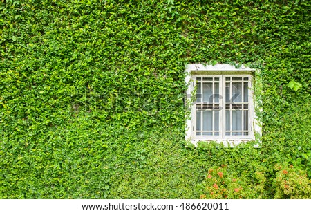 White window covered with green ivy