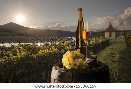white wine on background vineyard