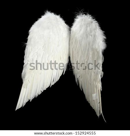 white wings  - stock photo