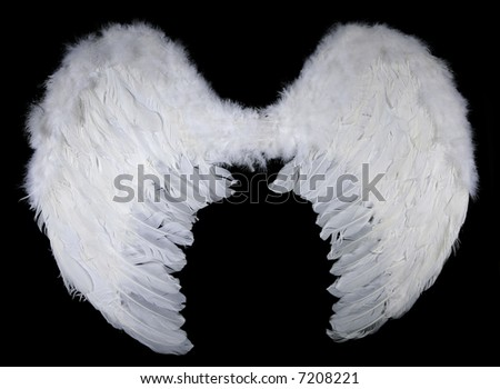 white wings on black - stock photo