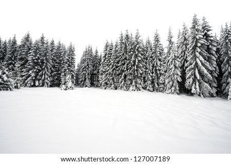 white winter forest - stock photo