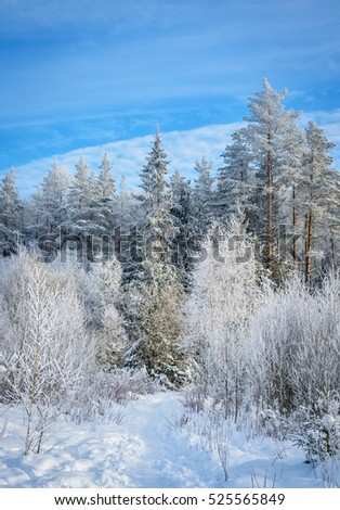 white winter in forest