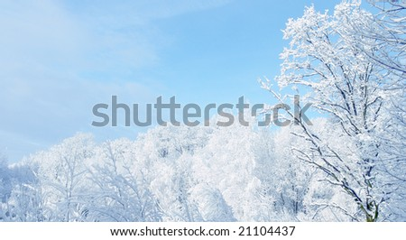 White winter landscape - stock photo