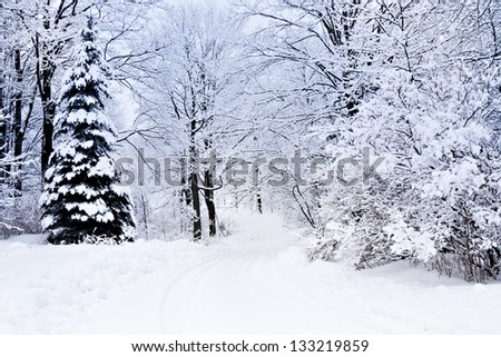 white winter landscape in Canada with trees covered in snow - stock photo