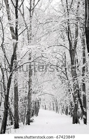White winter landscape with falling snow - stock photo